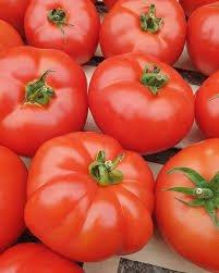 rajcica jabucar