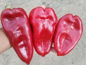 paprika za ajvar